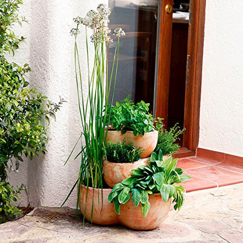 Kräuter Für Den Garten: Terracotta-Etagen-Pflanztopf